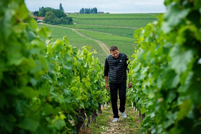 Frederic Martin dans les vignes