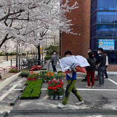 봄맞이 화단가꾸기.jpg