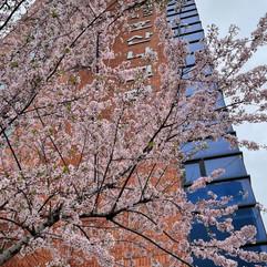 봄맞이 화단가꾸기0.jpg