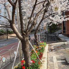 봄맞이 화단가꾸기5.jpg
