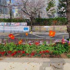봄맞이 화단가꾸기11.jpg