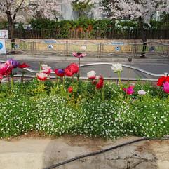 봄맞이 화단가꾸기9.jpg