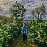 Hemp Fields, Wisconsin