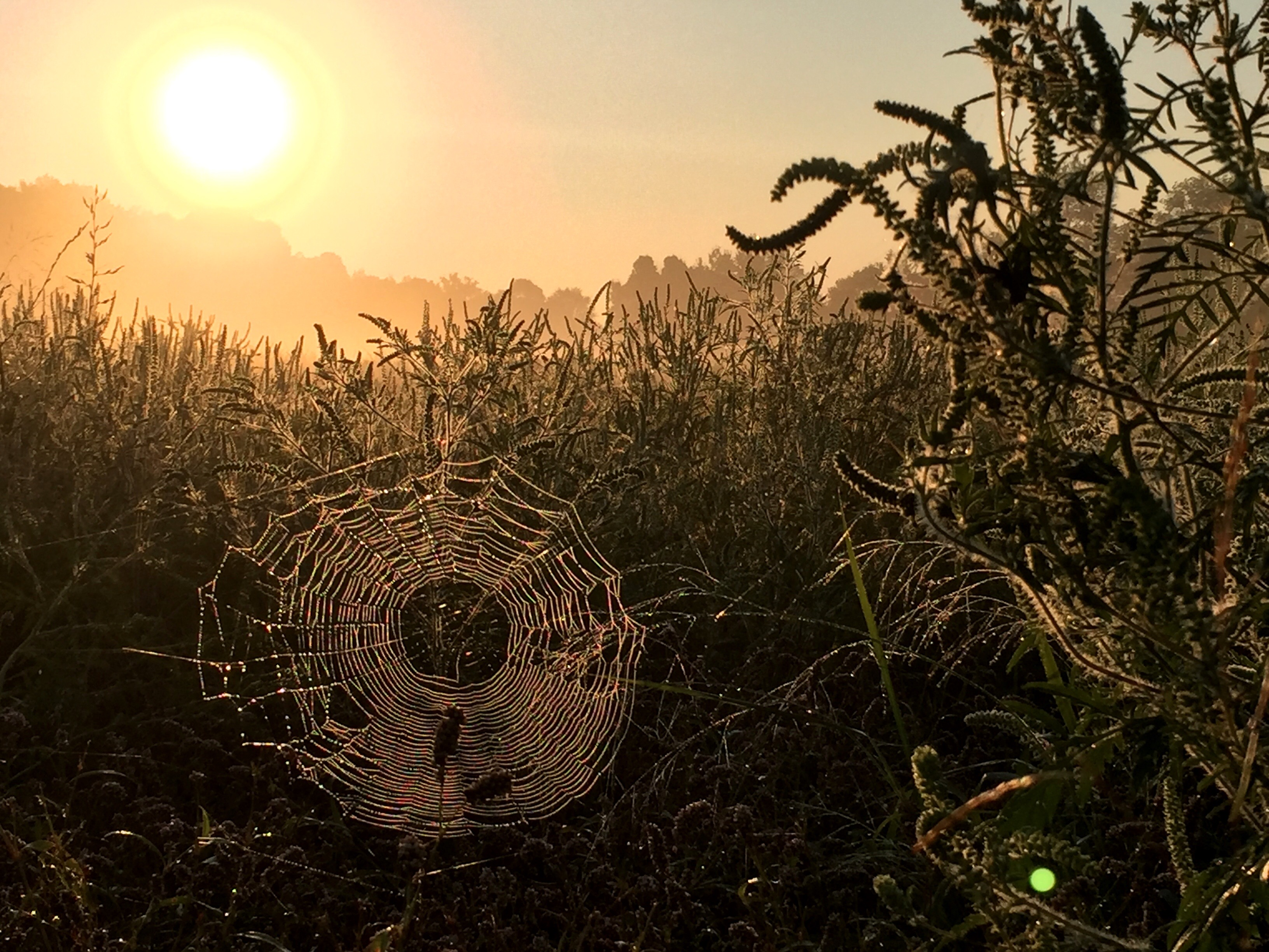 Web in morning dew