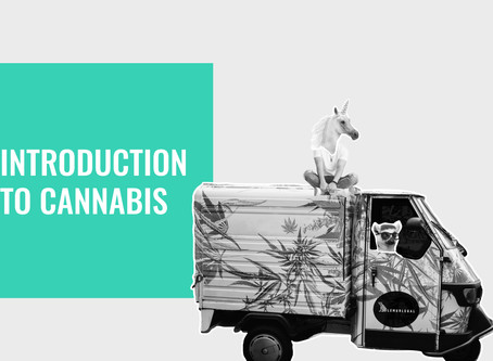 UNDERSTANDING THE MISUNDERSTOOD: Introduction to Cannabis