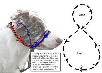 Head collar measure tip