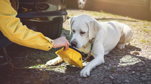 How to stop your dog getting heatstroke – according to science