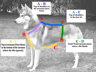 Dog harness measuring guide