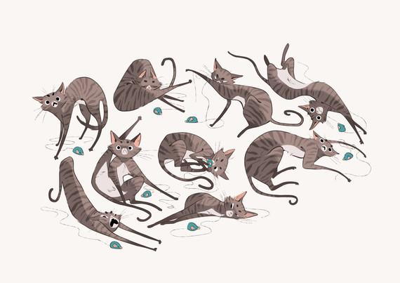 CatPlaying.jpg
