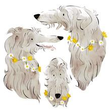 ScottishDeerhounds.jpg