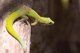 11-20-Geckos-1800x1200-1.jpg
