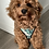 Thumbnail: Dog Harness & Lead, Leaf Dog Harness Leash, Tropical Dog Harness, Plant