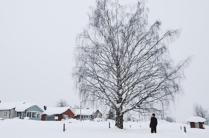 En svartklädd person bredvid en storvuxen björk. Det är snöigt ute, och i bakgrunden syns några villor.