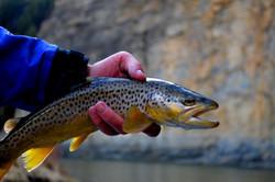 Blackfoot River Flyfishing