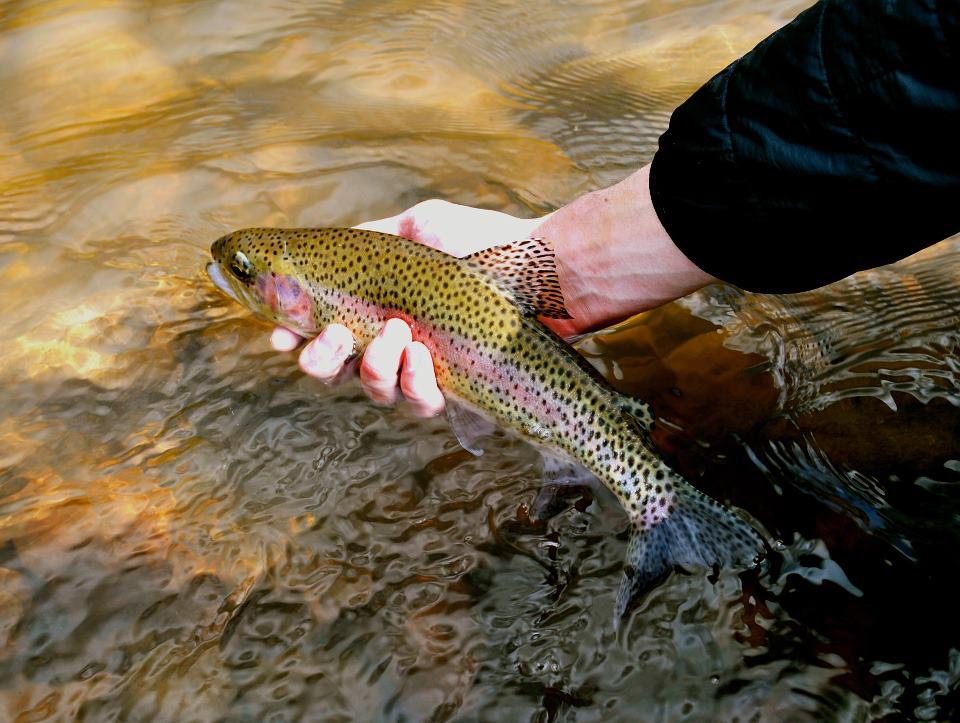 Missoula Montana Fly Fishing