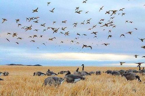 Montana Waterfowl Hunt (3 Days)
