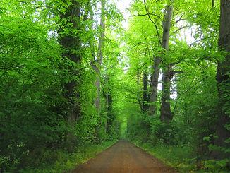 grøn skov.JPG.jpg