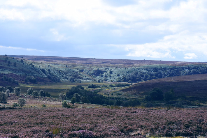 The Yorkshire Series: North York Moors