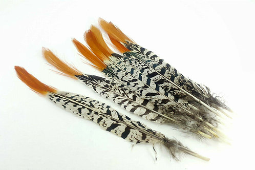 Pheasant feather 20-25cm