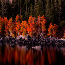 Autumn Color Reflected in the Twilight