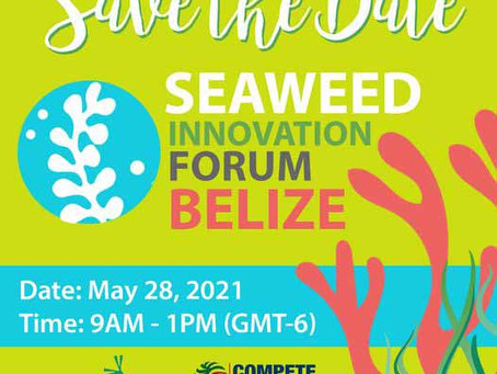 Event: Seaweed Innovation Forum || May 28, 2021 @ 9am Belize Time // 11am AST