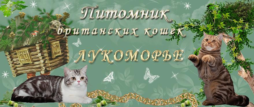 """""""Питомник британских кошек Лукоморье."""""""
