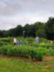 Community members work in garden