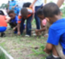Kids pick weeds in a garden