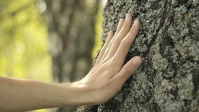 hand touching tree.jpg