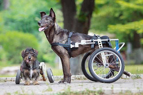 Інвалідний візок для задніх лап