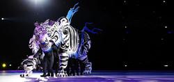 Tiger website banner