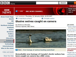 Elusive wolves caught on camera