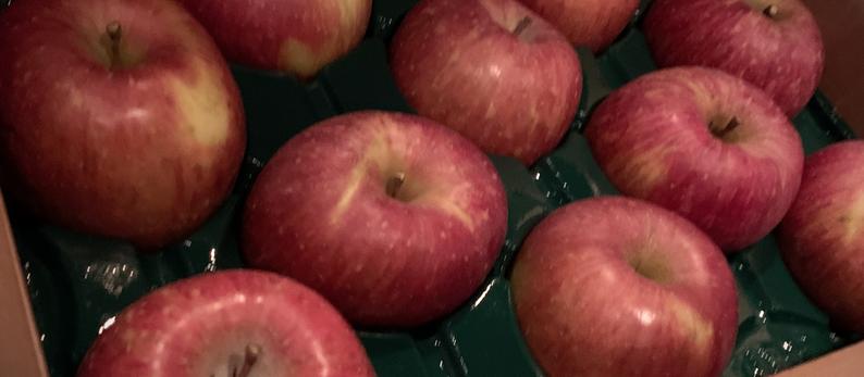 菅野果樹園より待望のリンゴ入荷いたしました。