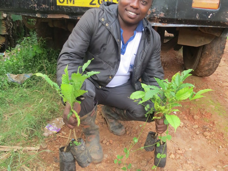 A SUCCESSFUL NATURAL FOREST TREE REPLANTING ACTIVITY MADE AT MKUSSU (MAGILA) FOREST NATURE RESERVE