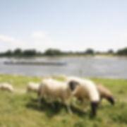 Tiere in der Natur beobachten, im Urlaub an der Elbe.