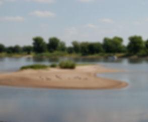 Die Elbe und ihre Natur bietet Lebensräume für Tiere ud Pflanzen, machen sie hier schöne Naturbilder.