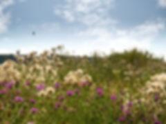 Flowers on the dike