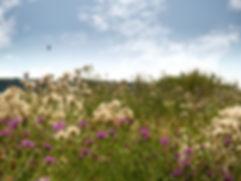 Naturbilder von Blumen,Landschaft und Tieren während der Wanderung auf dem Europäischen Fernwanderweg 6, entlang der Elbe bei Bleckede