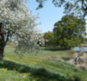 Es gibt viele Obstbaumalleen im Biospärenreservat, natürlich gewachsen in einer einmaligen Landschaft.