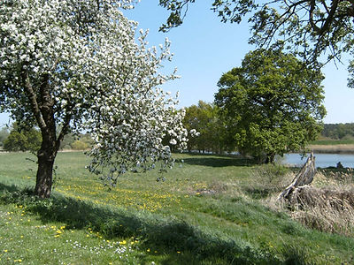 Fruit trees in the Elbe Floodplain