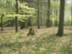 State forest Großer Buchwedel