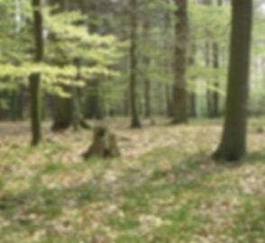 Natur erfahren in Stelle nahe Hamburg, der Waldlehrpfad im Staatsforst Großer Buchwedel