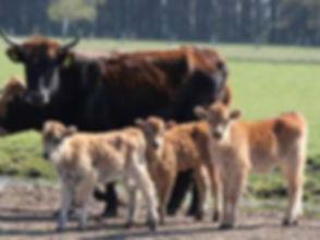 Entspannen in der Natur mit den Kühen nahe Hamburg an der Elbe