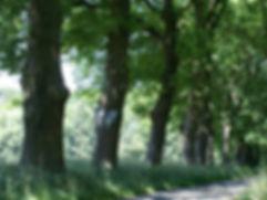 Wandern durchdie Marsch nahe der Elbe, Urlaub und Wandern, die Natur geniessen am Fluss Elbe oder in der Marsch