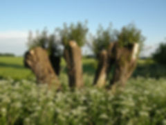 Trees in the Elbhöhen Nature Park - Wendland