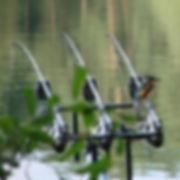 Angeln an der Elbe und dLandschaft und Natur geniessen