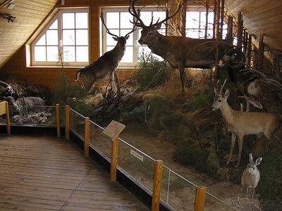 Das Waldmuseum - Göhrde Naturum