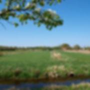 Elbmarsch, Landschaft, Natur, Naturschutzgebiete nahe der Elbe, mit guten Radwegen
