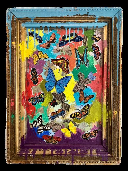Butterfly Drip