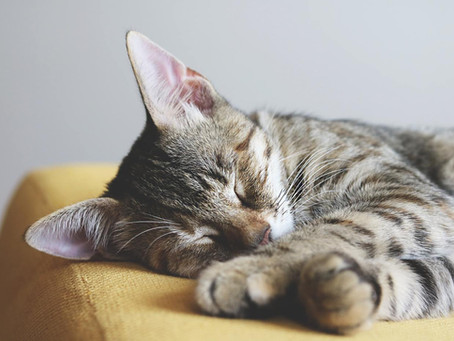 How to improve your cat's sleep quality
